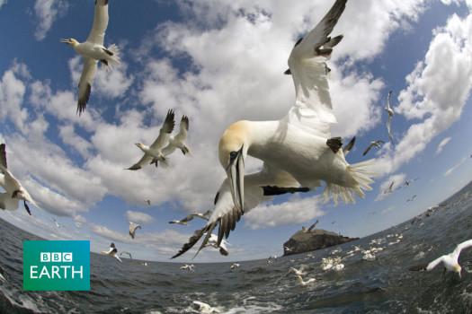 Na křídlech ptáků 3D